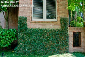 Ivy-wall-quality-landscaping