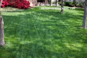 Perfect-Green-Lawn
