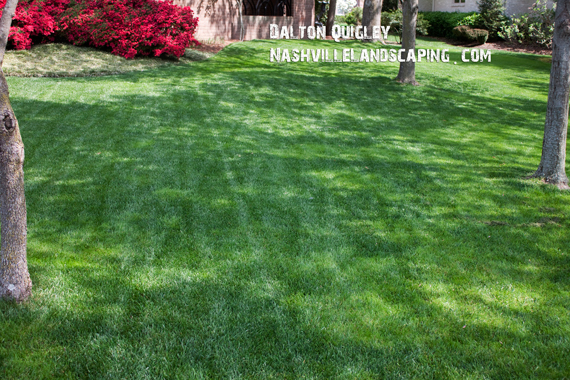 Perfect-Green-Lawn