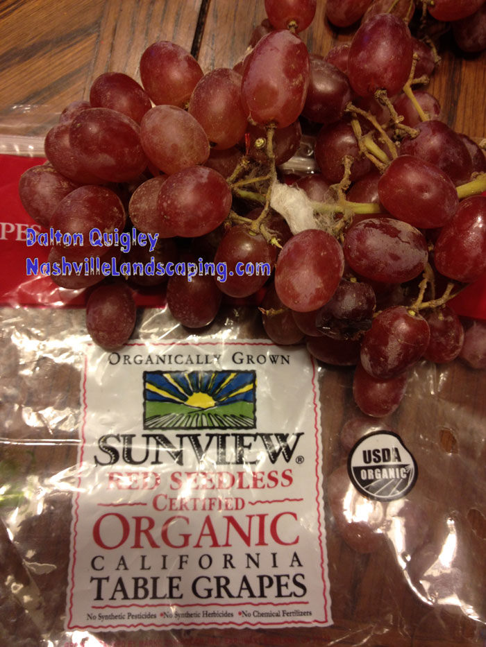 spider-web-organic-grapes
